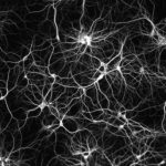 Spindle neurons and emotional freedom